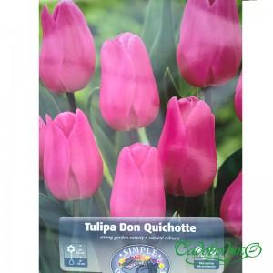 Тюльпан DON QUICHOTTE