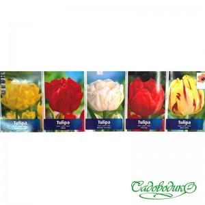 Тюльпаны  махровые 06