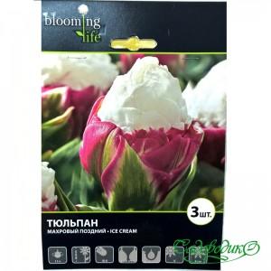 Тюльпан махровый поздний ICE CREAM
