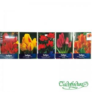 Тюльпаны многоцветковые(кустовые) 11